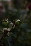 Tote Blume des Blumen-Hintergrundes Lizenzfreies Stockfoto