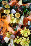 Tote Blumennahaufnahme Stockfotos