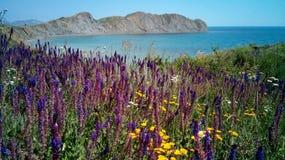 Tote Bucht in den Blumen, Frühsommer, Krim Stockbild