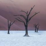 Tote Camelthorn-Bäume und rote Dünen, Deadvlei, Sossusvlei, Namibia Lizenzfreie Stockbilder