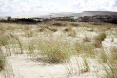 Tote Dünen mit Gras Stockbild