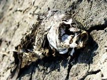 Tote Fische Stockbild