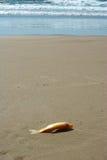 Tote Fische Lizenzfreie Stockfotografie