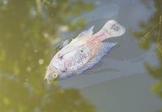 Tote Fische Lizenzfreies Stockbild