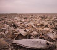 Tote Fische Stockfoto