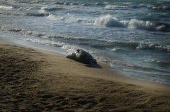 Tote Fische auf dem Strand? Bild hingen mit verziertem biohazard Symbol ein Wasserverschmutzungs-Konzept Kaspisches Meer Stockfoto