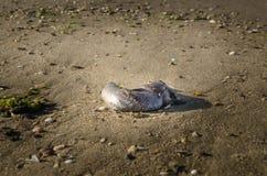 Tote Fische auf dem Strand? Bild hingen mit verziertem biohazard Symbol ein Wasserverschmutzungs-Konzept Kaspisches Meer Stockbilder