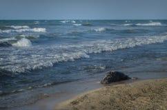 Tote Fische auf dem Strand? Bild hingen mit verziertem biohazard Symbol ein Wasserverschmutzungs-Konzept Kaspisches Meer Lizenzfreie Stockfotografie