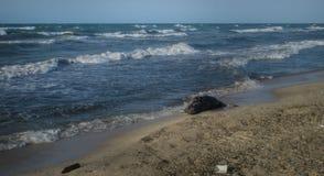 Tote Fische auf dem Strand? Bild hingen mit verziertem biohazard Symbol ein Wasserverschmutzungs-Konzept Kaspisches Meer Lizenzfreie Stockbilder