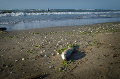Tote Fische auf dem Strand? Bild hingen mit verziertem biohazard Symbol ein Wasserverschmutzungs-Konzept Kaspisches Meer Stockfotografie