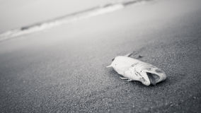 Tote Fische auf einem Strand Stockfotos