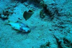 Tote Fische auf Korallenriff Lizenzfreies Stockfoto