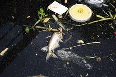 Tote Fische und Abfall, die auf die Oberfläche des Flusses schwimmt Stockfotos