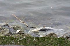 Tote Fische wegen der Verschmutzung im Wasser wegen des Abfalls Stockbilder