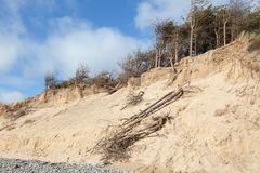 Tote Kiefer und Sanddünen bei Newborough in Anglesey Nord-Wales stockfoto