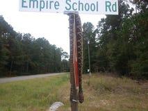 Tote Klapperschlange auf Straßenschild Stockbilder