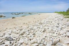 Tote Koralle auf dem Strand und Felsen im Meer Lizenzfreies Stockfoto