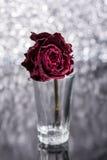 Tote Rose lizenzfreie stockfotografie