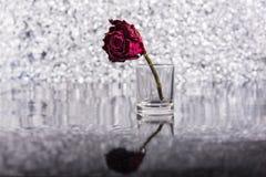 Tote Rose Stockfotografie