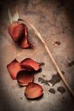 Tote Rose Lizenzfreies Stockbild