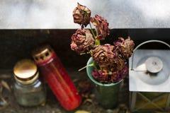 Tote Rosen Stockbilder