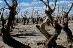 Tote Stadt in Argentinien Stockfoto