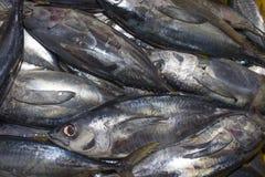 Tote Thunfische am Markt Stockfotos