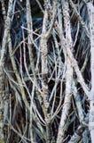 Tote tranks des Baums Lizenzfreie Stockbilder
