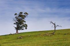 Tote und lebendige Bäume Stockfotografie