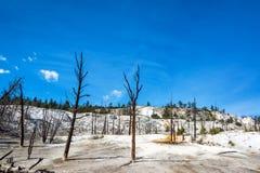 Tote unfruchtbare Bäume Lizenzfreies Stockfoto