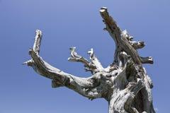 Tote Zweige Stockbilder