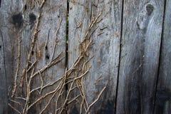 Tote Zweige auf hölzernem Zaun Lizenzfreie Stockfotografie