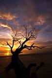 Tote Zweige gegen Sonnenaufgang stockbild