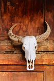 Totem the bull skull Stock Image