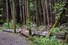 Totem Poles on the ground at the Totem Bight State Historical Park in Ketchikan, Alaska. Totem Poles laying on the ground, to be restored, at the Totem Bight stock photography