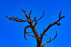 Toter Baum lizenzfreie stockbilder