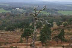 Toter Baum Stockfoto
