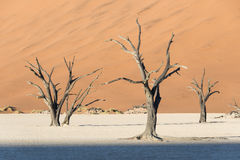 Toter Baum 2 Lizenzfreie Stockbilder