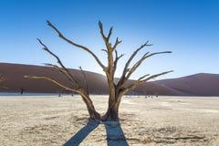 Toter Baum 3 Lizenzfreie Stockbilder
