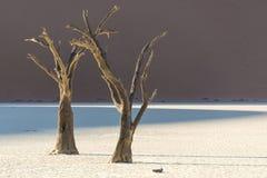 Toter Baum 4 Lizenzfreies Stockbild