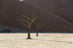 Toter Baum 13 Stockbilder