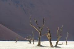 Toter Baum 8 Stockbild