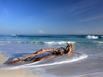 Toter Baum auf dem Strand Lizenzfreie Stockbilder