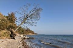 Toter Baum auf dem Strand Stockbilder