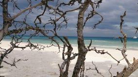 Toter Baum auf dem Strand stockfotos