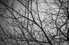 Toter Baum auf einem dunklen bewölkten Himmel Stockbilder