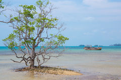 Toter Baum auf einem Strand Lizenzfreie Stockbilder