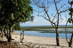 Toter Baum auf einem Strand Lizenzfreies Stockfoto