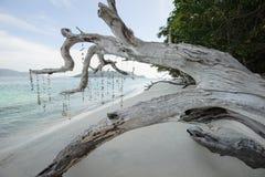 Toter Baum auf einem Strand am Sonnenschein Stockfoto