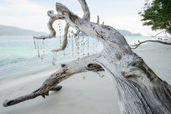Toter Baum auf einem Strand am Sonnenschein Lizenzfreie Stockbilder